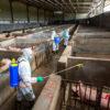 Alerta comercial: fondos potencian apuestas bajistas ante la posibilidad de un derrumbe de la demanda china provocada por la fiebre porcina africana