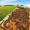 Dos estudios publicados en Nature muestran evidencia de que los neonicotinoides provocan daños en poblaciones de abejas