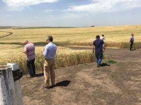 Terminó la pesadilla kirchnerista: Argentina volvió a integrar la mayor parte de sus exportaciones cerealeras con partidas de trigo pan