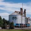 """Corredores de granos denuncian que la ventaja oficial concedida a AFA en trigo """"viola las normas más elementales de competencia"""""""