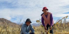 Crearon un programa con 100 M/$ para brindar subsidios a emprendimientos de agricultura familiar, campesina e indígena