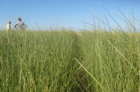 Carambola climático-burocrática: la oferta 2015 de semillas forrajeras será aceptable por el stock remanente del ciclo anterior