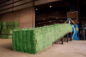 Exportaciones argentinas de fardos de alfalfa crecieron más de un 240%: el desafío es ganarle cuota de mercado a EE.UU.