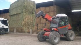 Cayeron las exportaciones argentinas de fardos de alfalfa por la menor participación de empresas externas al negocio