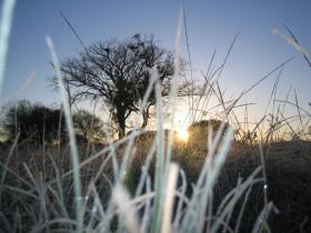 Llegaron las heladas a la región pampeana: la masa de aire frío permanecerá al menos hasta el domingo