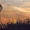 Reseteo monetario global: porqué es estratégico promover el crecimiento sostenible del sector agroindustrial