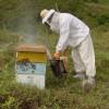 La caída de la exportaciones argentinas de miel fueron compensadas por un aumento de precios: casi el 70% se envió a EE.UU.