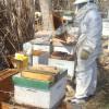 El precio de exportación de la miel argentina subió más de un 20% en el último año