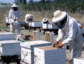 Los ingresos de divisas generados por la exportación argentina de miel aumentaron a pesar de una caída del 15% del volumen colocado