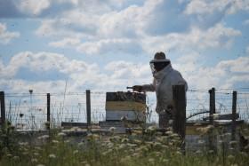 Comenzaron a desacelerarse los precios de exportación de la miel argentina en línea con un retraso creciente de los valores pagados a los apicultores