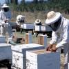 Cosas que pasan cuando se compite de manera directa con los chinos: se destruyeron los precios de exportación de la miel argentina
