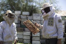 Siguen recuperándose los precios de exportación de la miel: el efecto derrame llegó a los apicultores