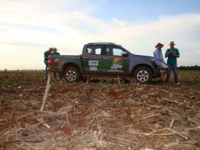 El poder de compra de la soja se mantiene constante en Brasil a pesar de la caída del valor de la oleaginosa: en Argentina se derrumbó