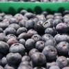Mal momento para el arándano argentino: precios planchados con una oferta exportable casi 40% inferior