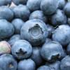 Campaña para el olvido para el arándano argentino: menores exportaciones con precios bajos