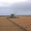 Comenzó a ingresar al mercado la cosecha argentina de arveja: los precios máximos se duplicaron en el último año