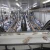 Se salvó del derrumbe: la exportación argentina de cortes aviares sigue firme a pesar de estar concentrada en apenas dos mercados