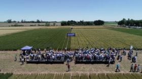 El trigo HB4 de Bioceres tiene un gran potencial: pero no en la Argentina