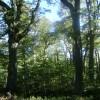 Default ambiental: con el incumplimiento de la Ley de Bosques el gobierno nacional se apropió de 13.500 M/$ pertenecientes a las provincias