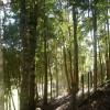 Fijaron los valores de los subsidios forestales correspondientes a plantaciones de 2017 con un ajuste de hasta el 25%