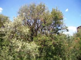 Con el incumplimiento de la Ley de Bosques el gobierno nacional se apropió de 6000 M/$ de las provincias