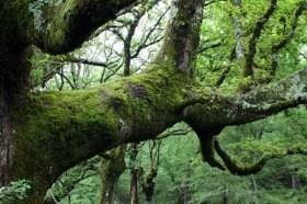 Federalismo Cero: con el incumplimiento de la Ley de Bosques el Estado nacional se apropió de 65.000 M/$ pertenecientes a las provincias