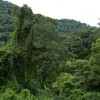 Default ambiental: el gobierno nacional violará la Ley de Bosques por sexto año consecutivo