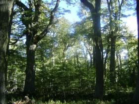 Federalismo Cero: con el incumplimiento de la Ley de Bosques el gobierno nacional se apropió de 18.400 M/$ pertenecientes a las provincias