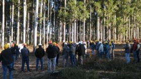 Por primera vez desde el inicio del régimen de promoción se regularizaron los pagos de subsidios forestales gracias al aporte de los propietarios de vehículos