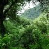 El gobierno nacional violará la Ley de Bosques por cuarto año consecutivo