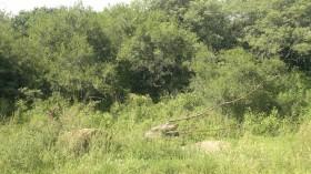 """La AGN denunció que la desfinanciación del Fondo de Conservación de Bosques promueve """"una baja efectividad de protección"""" de los ecosistemas naturales"""