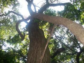 Un clásico: el gobierno nacional violará la Ley de Bosques por noveno año consecutivo para apropiarse de recursos provinciales