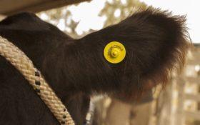 El Senasa estableció nuevos requisitos para la inscripción de dispositivos de identificación animal