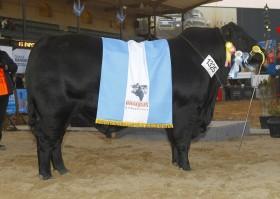 En lo que va de 2012 se duplicaron las exportaciones argentinas de semen bovino