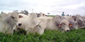 Brasil desbancó a Paraguay para quedarse con casi la mitad del mercado chileno de carne vacuna