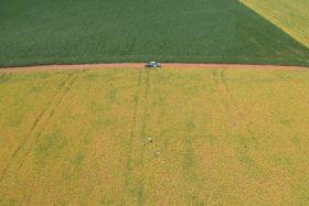 Brasil se consolida en 2020/21 como líder absoluto en el mercado mundial de soja con un crecimiento proyectado de 10 millones de toneladas
