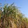 El ajuste agroindustrial: redujeron en un 3% del precio del etanol cañero destinado al corte obligatorio con nafta