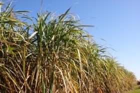 El gobierno brasileño invierte en compañía de etanol celulósico con el objetivo de convertirse en una potencia bioenergética