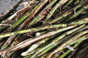 """Progresismo inverso: pequeños productores de caña de azúcar subsidian con """"cupo interno"""" a grandes ingenios y cadenas de supermercados"""