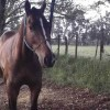En marzo comienza un nuevo sistema para comercializar caballos que pretende eliminar la posibilidad de que se faenen animales robados