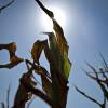 No afloja la ola de calor: en la semana la mayor probabilidad de precipitaciones se concentrará en el NOA