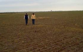 Molinos se retiró del mercado de alquileres agrícolas: liberó 120.000 hectáreas en la región pampeana