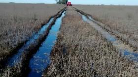 Otra semana con lluvias intermitentes que complican el último tramo de la siembra de trigo