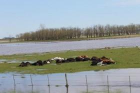 Esta semana no se esperan precipitaciones en las zonas bonaerenses inundadas: el jueves se llueve todo en el NEA