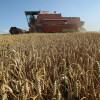 Coberturas tempranas: ya se negociaron casi 60.000 toneladas de futuros y opciones de trigo Rosario 2019/20