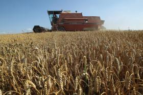 Un Tratado de Libre Comercio es más fuerte que 8000 kilómetros de distancia: Argentina no puede competir con el trigo canadiense en Chile