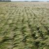 Esta semana las lluvias se concentrarán en el NOA: prevén bajas temperaturas en el sur bonaerense