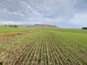 El gobierno ajustó por inflación la categorización de Pyme agropecuaria: el nuevo límite es de hasta 676 M/$