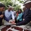 Chupate esa mandarina: Chile genera más divisas con las frutas que Argentina con el maíz