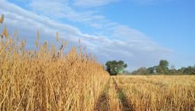 El clima jugó en contra de la cosecha argentina de chía: en lo que va de agosto los valores de exportación se ubican en un rango de 2069 a 5000 u$s/tonelada